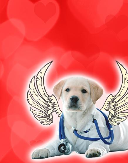 cherub vet dog2